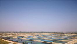 君子道上市孵化器项目六:山东甲鱼生物科技项目